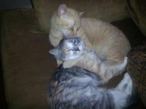 Zwei Katzen, die auf Stuhl sich anschmiegen Lizenzfreies Stockbild
