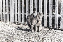 Zwei Katzen, die ihre Backen auf einem Bauernhof an einem sonnigen Tag, lokalisiert reiben Faded farbige Fotografie, Tierphotogra lizenzfreies stockbild