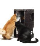 Zwei Katzen, die mit Katze scratcher spielen stockbild