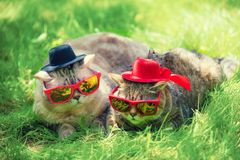 Zwei Katzen, die Sonnenbrille und Hüte tragen lizenzfreies stockbild