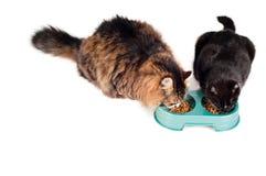 Zwei Katzen, die von einer grünen Schüssel essen Stockfotografie