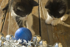 Zwei Katzen, die Weihnachtsdekorationen betrachten Stockbild