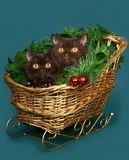Zwei Katzen in einem WeihnachtsPferdeschlitten. Stockbilder