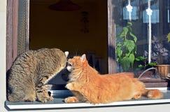 Zwei Katzen am Fenster Stockfotografie