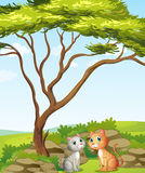 Zwei Katzen im Wald Stockbild