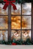 Zwei Katzen/Kätzchen, die am Fenster mit Weihnachten-decorati sitzen Stockbild