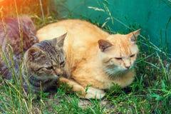 Zwei Katzen rot und gestreift im Yard stockbild