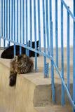 Zwei Katzen schwarzer und mehrfarbiger Farbton stehen still stockfotografie