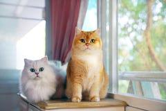 Zwei Katzen sind Liebhaber Stockbilder