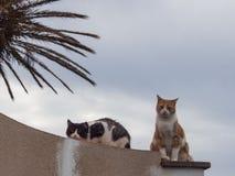 Zwei Katzen werfen für eine schöne Fotografie auf lizenzfreie stockfotografie