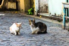 Zwei Katzenhaustiere lizenzfreies stockbild