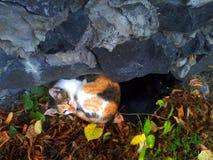 Zwei Katzenlügenrückseiten miteinander Lizenzfreie Stockbilder