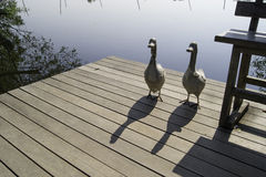 Zwei keramische Enten auf Flussufer stockfoto