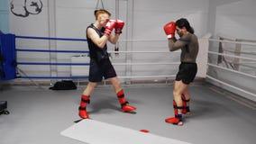 Zwei kickboxers bilden auf Ringside im tretenden und lochenden Kampfverein aus