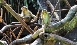 Zwei Kinder Affe auf dem Baum Lizenzfreie Stockfotografie
