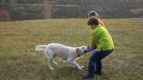 Zwei Kinder, die mit golden retriever am Feld spielen stock footage