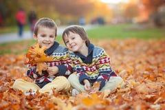 Zwei Kinder, Jungenbrüder, spielend mit Blättern im Herbstpark Stockbild