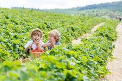 Zwei kleine Geschwisterjungen auf Erdbeere bewirtschaften im Sommer Stockfoto