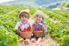 Zwei kleine Geschwisterjungen auf Erdbeere bewirtschaften im Sommer lizenzfreie stockbilder