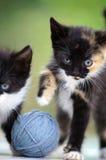 Zwei kleine Kätzchen Stockbild