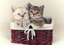 Zwei kleine Kätzchen lizenzfreie stockbilder