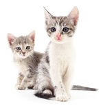 Zwei kleine Kätzchen Stockbilder