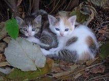Zwei kleine Kätzchen stockfoto