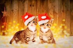 Zwei kleine Kätzchen, die im Schnee mit Weihnachten-deco sitzen Lizenzfreie Stockfotos