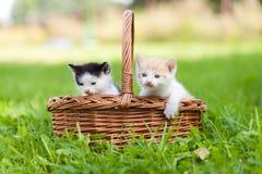 Zwei kleine Katzen im Korb draußen Lizenzfreie Stockfotos