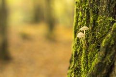 Zwei kleine Pilze Stockfoto