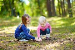 Zwei kleine Schwestern, die Kiefernkegel erfassen Stockfotos
