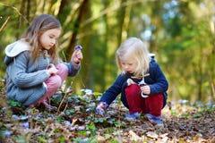 Zwei kleine Schwestern, welche die ersten Blumen des Frühlinges auswählen Lizenzfreie Stockfotos