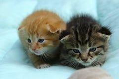 Zwei kleine Tabby Kittens stockbild