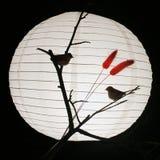 Zwei kleine Vögel über hellem Hintergrund Lizenzfreies Stockfoto