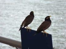 Zwei kleine Vögel Lizenzfreies Stockfoto