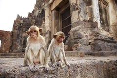 Zwei kleiner Affe und Altbau Stockfoto