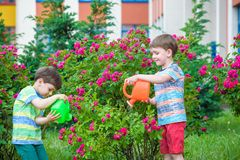 Zwei Kleinkindjungen, die Rosen mit Dose im Garten wässern Familie, Garten, arbeitend, Lebensstil im Garten Stockfoto