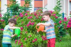Zwei Kleinkindjungen, die Rosen mit Dose im Garten wässern Familie, Garten, arbeitend, Lebensstil im Garten Lizenzfreie Stockfotos