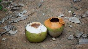 zwei Kokosnüsse auf dem Sandboden stockfotos