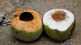 zwei Kokosnüsse auf dem Sandboden lizenzfreies stockfoto
