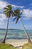 Zwei Kokosnussbäume Stockfoto