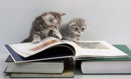 Zwei Kätzchen betrachten ein Buch Stockbild