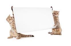Zwei Kätzchen mit Schild oder Fahne Stockfotografie