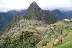 Zwei Lamas in den Ruinen von Machu Picchu Stockfotos