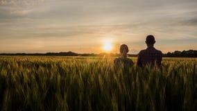 Zwei Landwirte, ein Mann und eine Frau, schauen vorwärts zum Sonnenuntergang über einem Feld des Weizens Teamwork im Agrargeschäf lizenzfreie stockfotos
