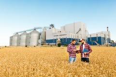 Zwei Landwirte stehen auf einem Weizengebiet mit Tablette Agronomen besprechen Ernte und Ernten unter Ohren des Weizens mit Korn stockfoto