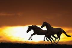 Zwei laufende Pferde Lizenzfreies Stockfoto
