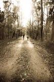 Zwei Leute, die in Wald gehen Stockfotografie