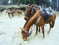 Zwei liebevolle junge Pferde Lizenzfreie Stockfotos