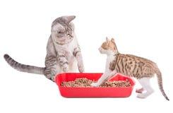 Zwei lustige Katzen, die in einer Katzentoilette spielen Stockbilder